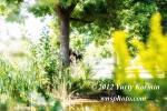Engagement Photograpns053
